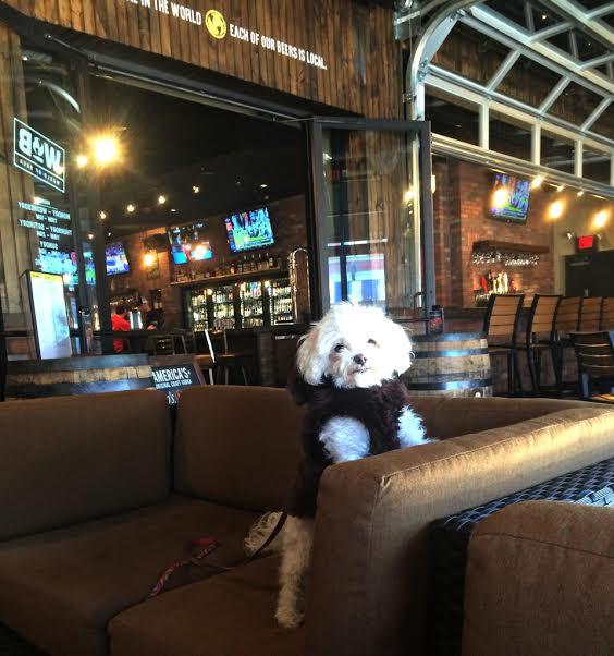 dog friendly restaurants in chattanooga | chattavore