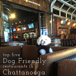 dog friendly restaurants in chattanooga | chattavore